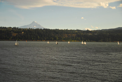 sailboats with Mt Hood