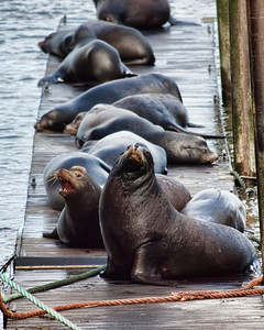 Sea lion dock!