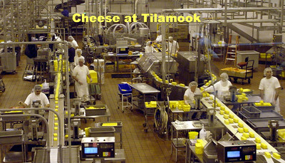 Just over a hundred years ago, several small creameries teamed up to form the Tillamook County Creamery Association (TCCA) to ensure the quality and reputation of cheese made in the Tillamook Valley.