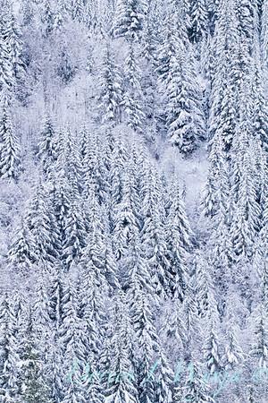 Snow covered treeline_376