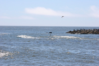 Whale Watching - Newport, Oregon
