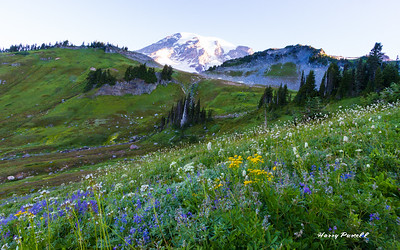 meadows on the slopes of Mt Rainier, a mile above Paradise Lodge