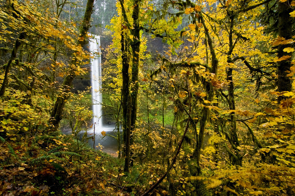 Autumn,Silver Creek Falls, Oregon<br /> © Douglas Remington - Ethereal Light Photography, LLC. All Rights Reserved. Do not copy or download.