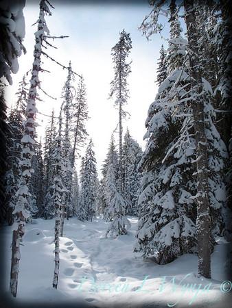 Trillium Lake ski trek_181