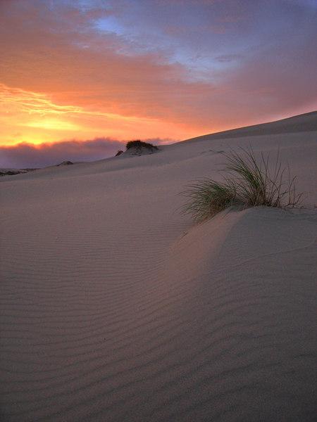 Oregon Dunes at Sunset