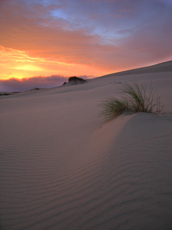 Oregon Dunes at Sunset