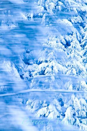 Snow covered treeline_363