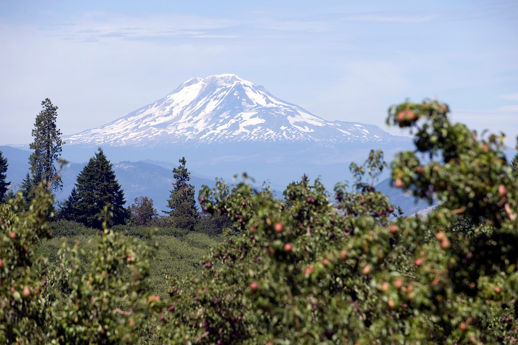 Mount Rainier from Oregon pear orchard