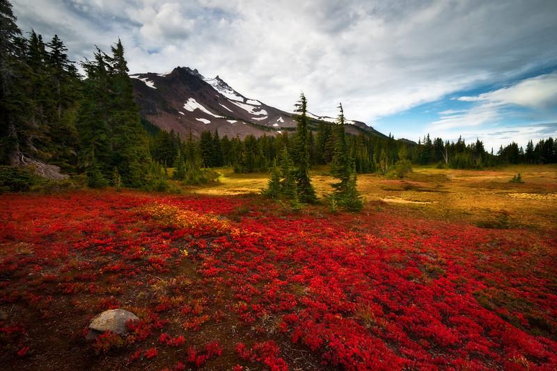 Oregon Tundra.