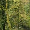 Oregon_4693