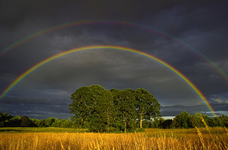 Double rainbow over oak tree grove, Western Oregon