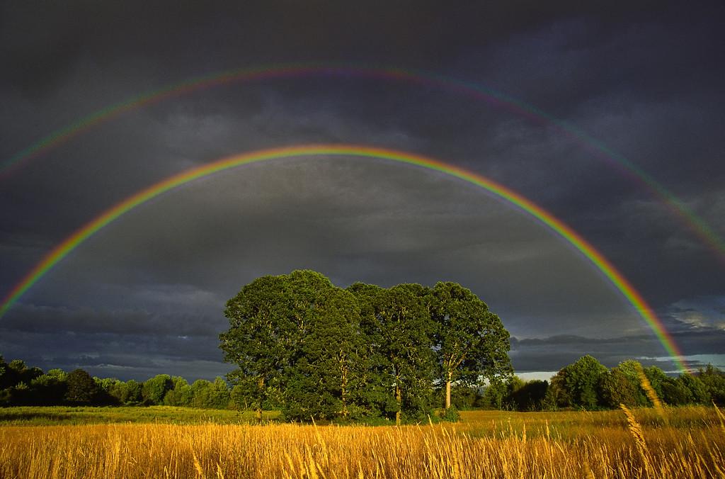 Double rainbow over oak tree grove, Western Oregon
