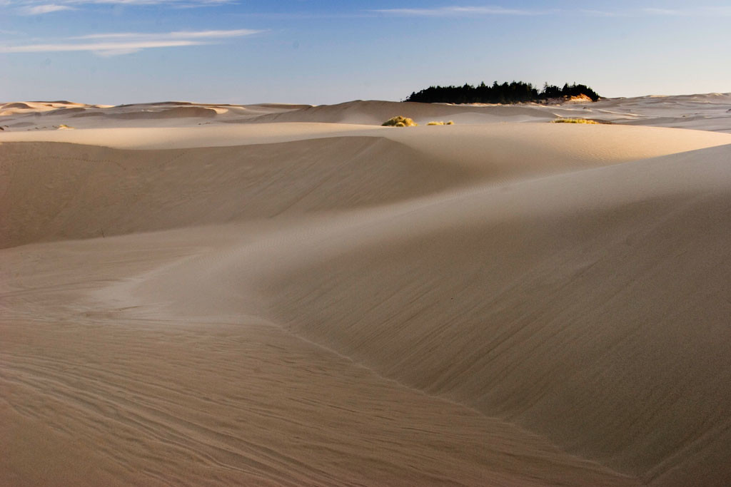 Fortunately, there are several small areas of the Oregon Dunes that are protected from the ravages of off road vehicles.