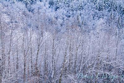 Snow covered treeline_382