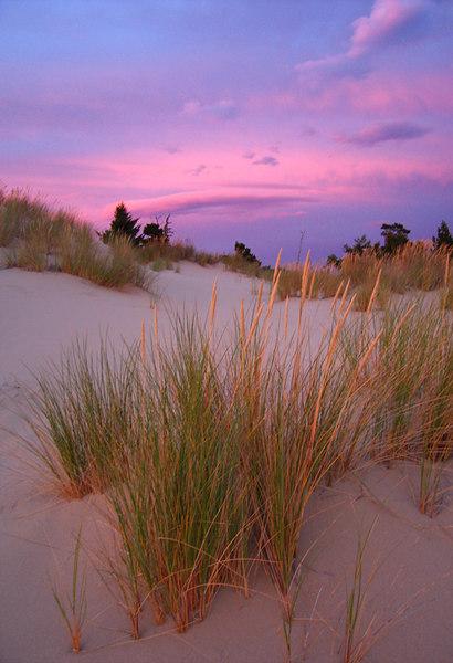 Red fescue in Oregon Dunes