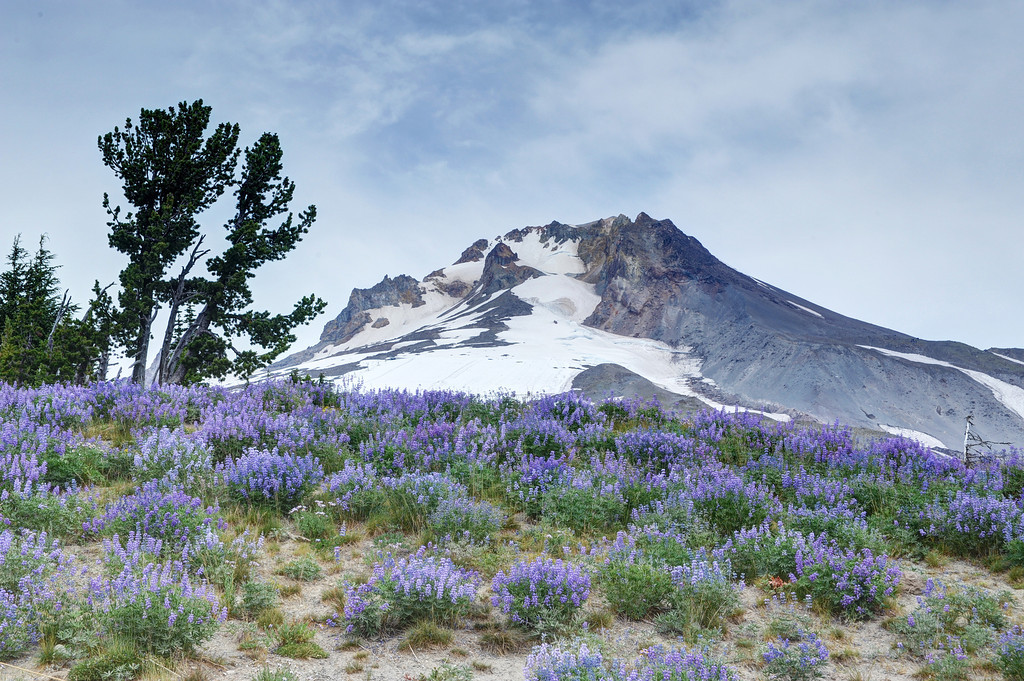 Wildflowers at Mount Hood
