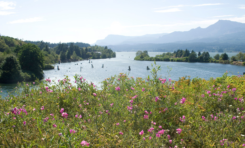 Wildflowers on the Columbia River