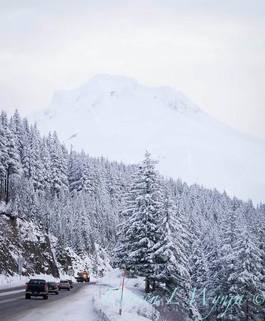 Snow covered Mt Hood_193
