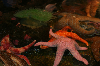 Starfish at Aquarium