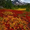 Oregon tundra