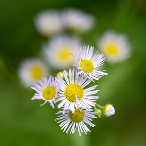 July Flowers III