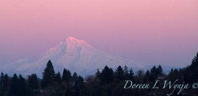 Mt Hood pink sunset_9307
