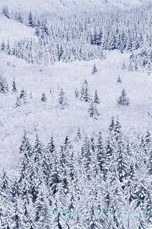 Snow covered treeline_371