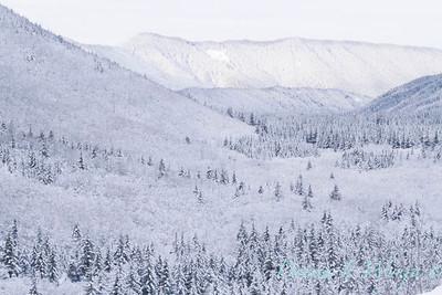 Snow covered treeline_369