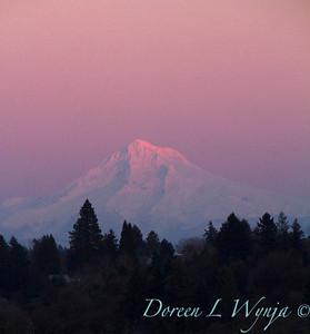 Mt Hood pink sunset_9305