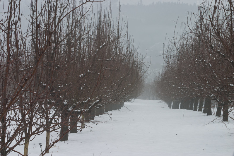 Fruit trees resting up