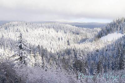 Snow covered treeline_388
