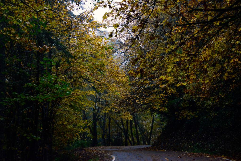 Fall Colors - Oregon Travel Photography - USA