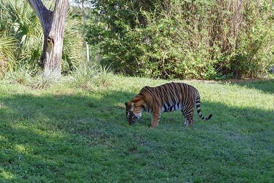Orlando (2013) - Animal Kingdom
