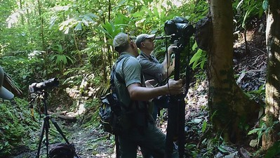 filming termite mound Osa February 2021