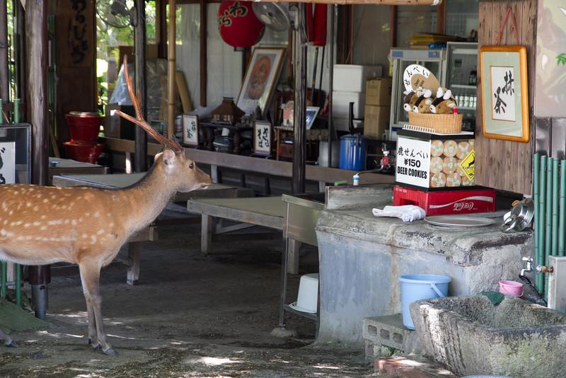 A stag hungrily eyes a box of deer cookies. (for deer, not of deer!)