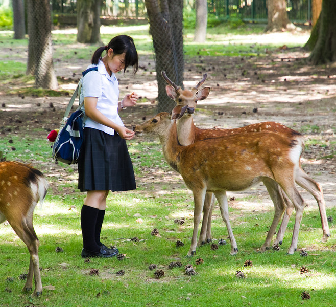 A school girl feeds one of the park deer.