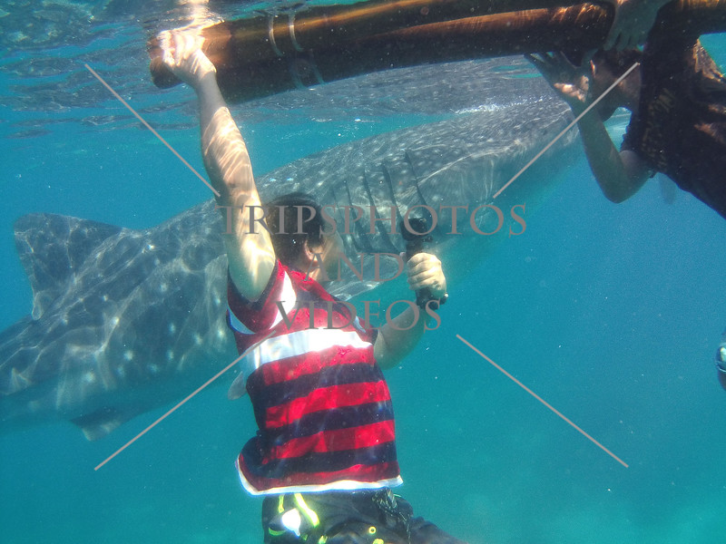 Swimming with whale shark at Oslob, Cebu, Philippines.