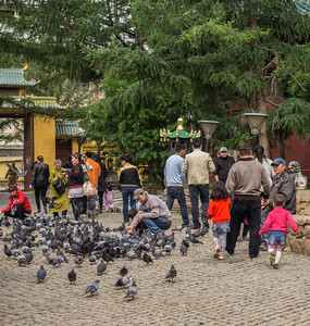 The large number of pigeons getting fed at the Gandan Monastery