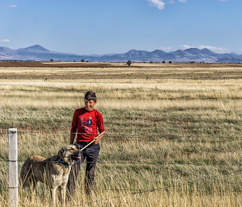 Young man and dog on the road from Antalya to Lake Beyschir