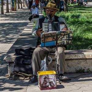 Street musician in Tirana