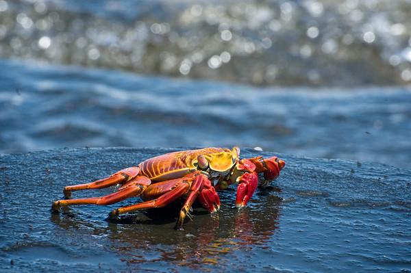 _DSC0281_crab