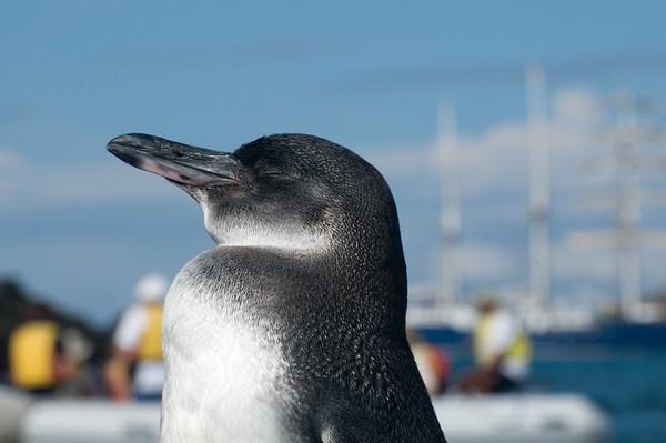 _DSC9583_penguin