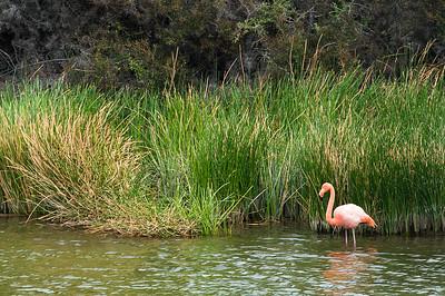 _DSC8038_flamingo