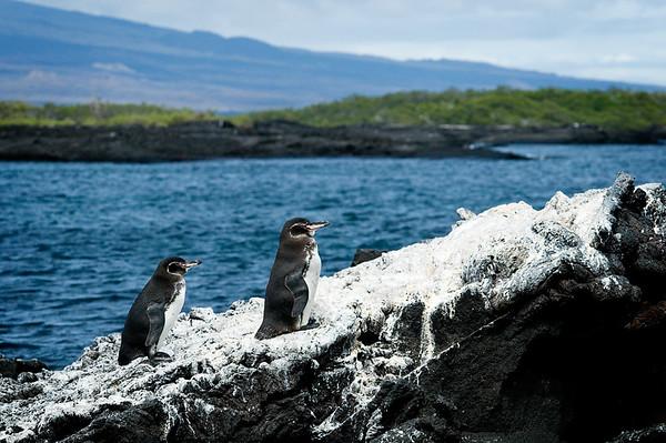 _DSC8219_penguins