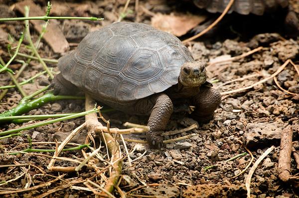 _DSC7843_tortoise_baby