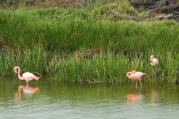 _DSC8056_flamingos