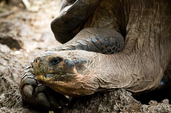 _DSC7897_tortoise