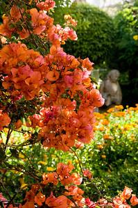 _DSC5789_Pergola_garden