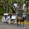 Carriage in Garden District - New Orleans