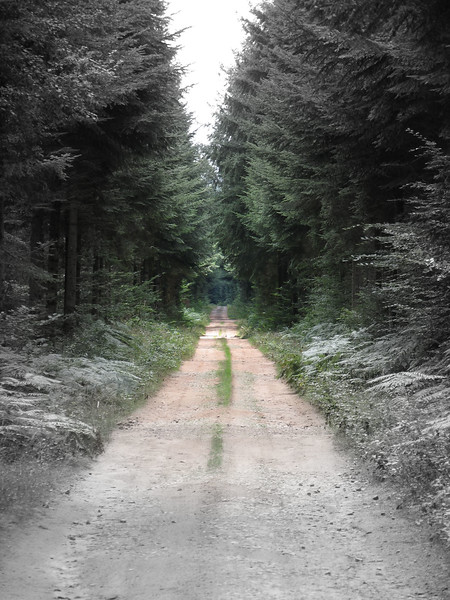 Taken in a forest in France, a long track stretching out ahead into the distance.